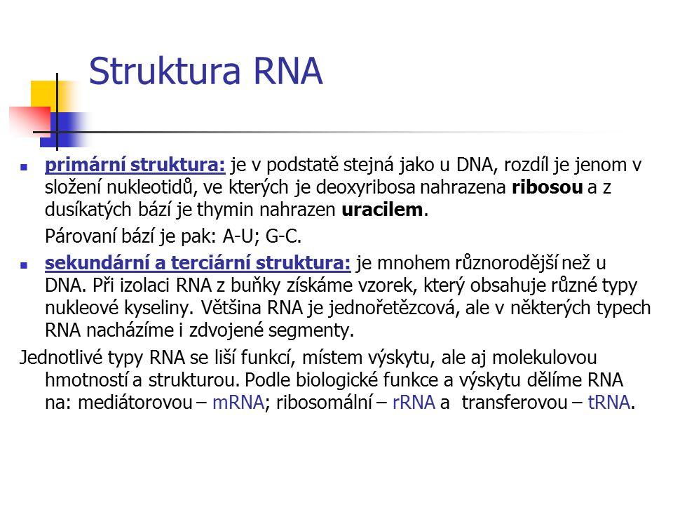 Struktura RNA
