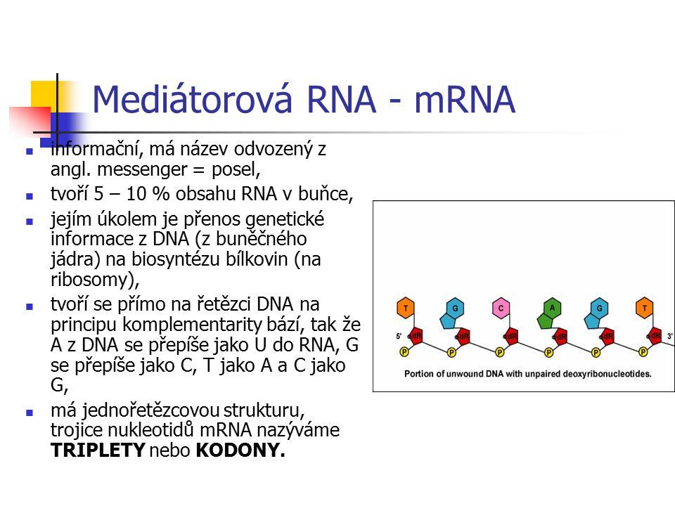 Mediátorová RNA - mRNA informační, má název odvozený z angl. messenger = posel, tvoří 5 – 10 % obsahu RNA v buňce,