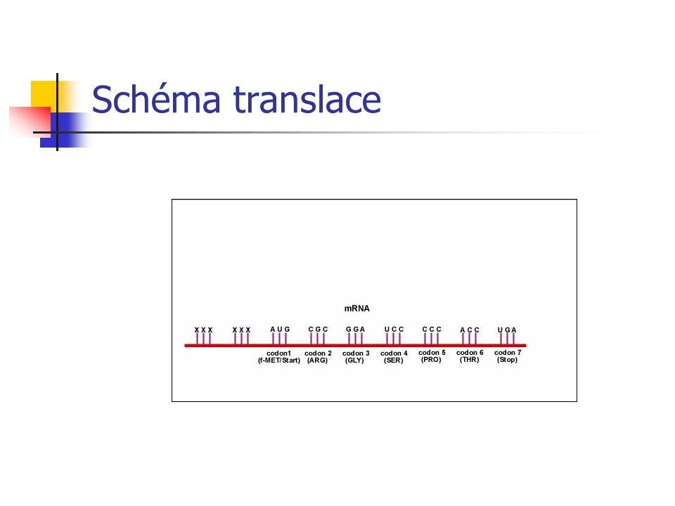 Schéma translace