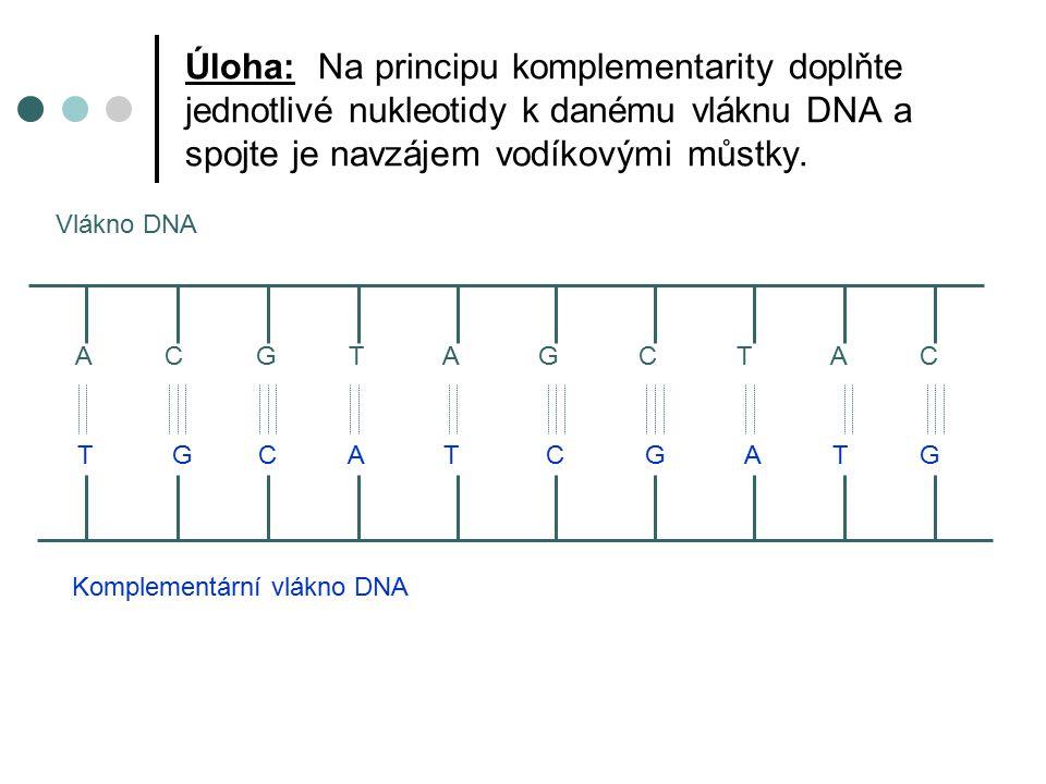 Úloha: Na principu komplementarity doplňte jednotlivé nukleotidy k danému vláknu DNA a spojte je navzájem vodíkovými můstky.