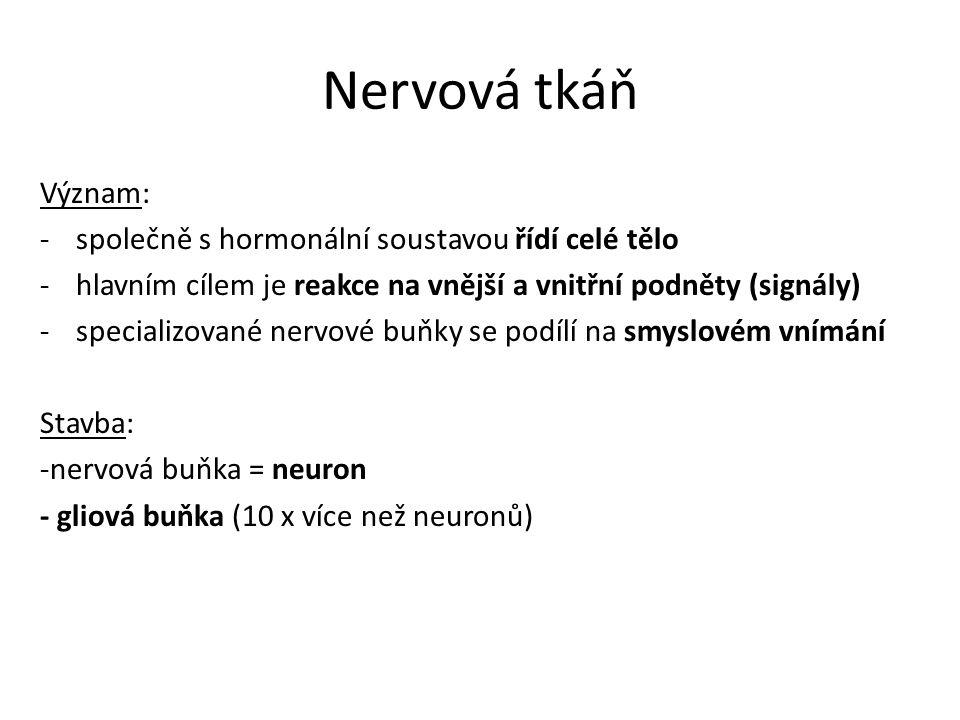 Nervová tkáň Význam: společně s hormonální soustavou řídí celé tělo