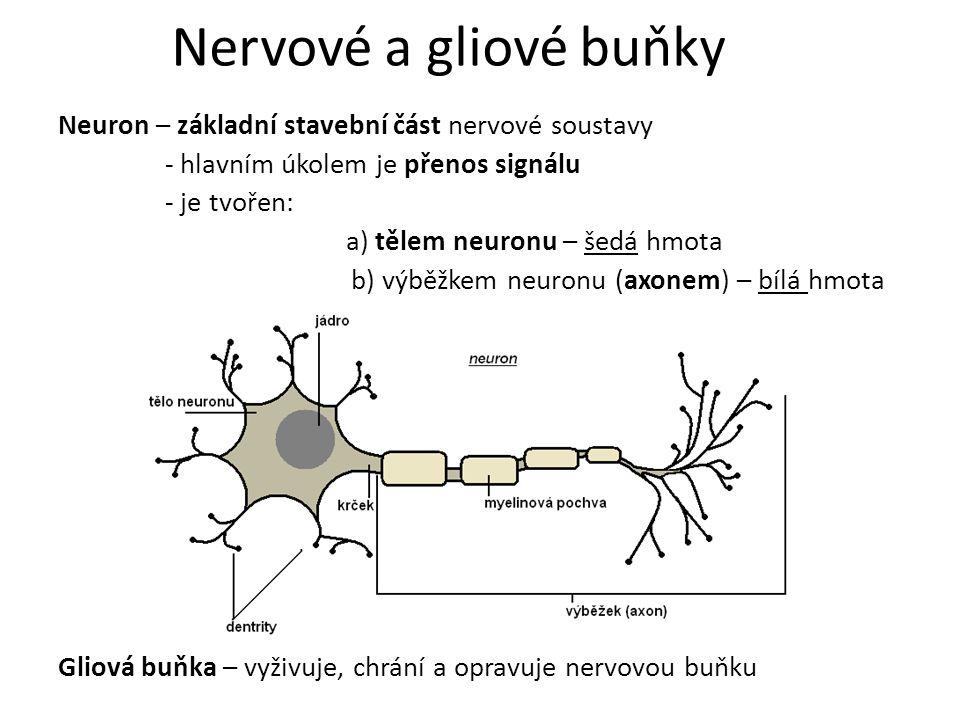 Nervové a gliové buňky
