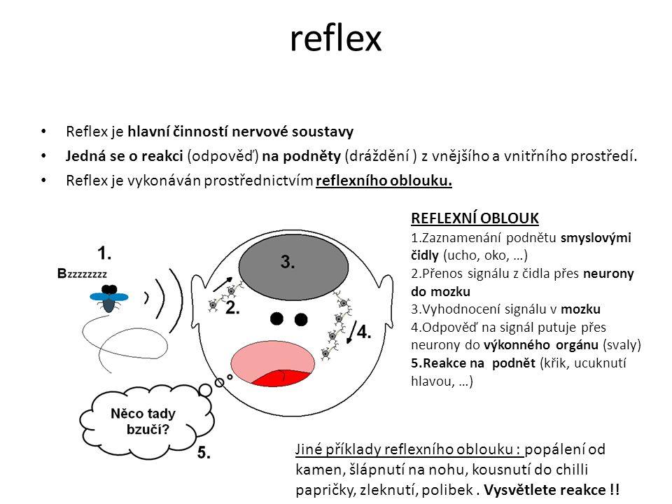reflex Reflex je hlavní činností nervové soustavy
