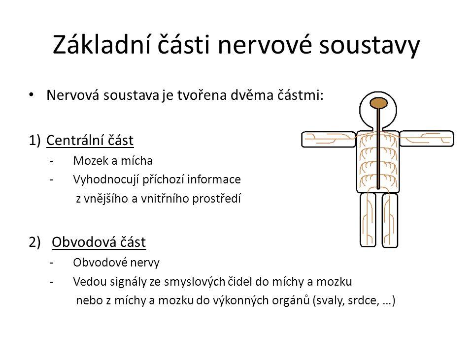 Základní části nervové soustavy