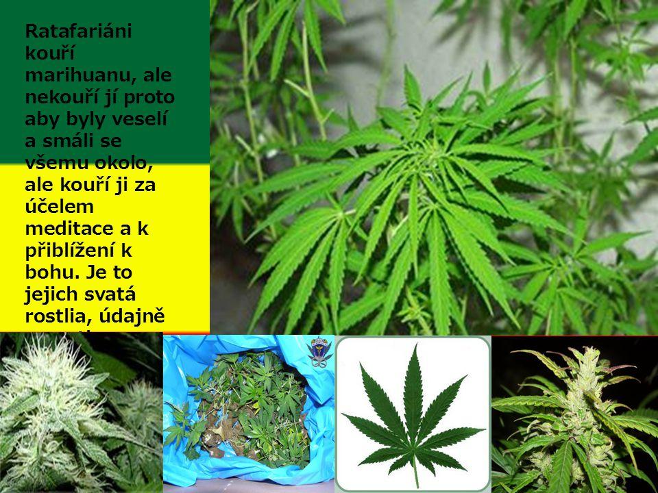 Ratafariáni kouří marihuanu, ale nekouří jí proto aby byly veselí a smáli se všemu okolo, ale kouří ji za účelem meditace a k přiblížení k bohu.