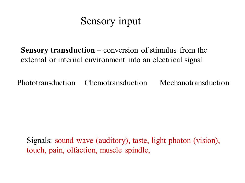 Sensory input Sensory transduction – conversion of stimulus from the external or internal environment into an electrical signal.