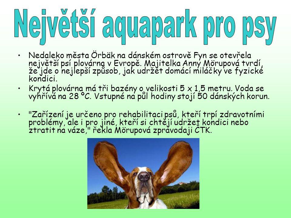 Největší aquapark pro psy