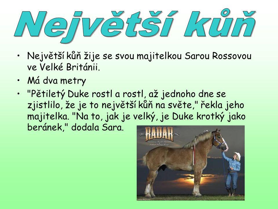 Největší kůň Největší kůň žije se svou majitelkou Sarou Rossovou ve Velké Británii. Má dva metry.