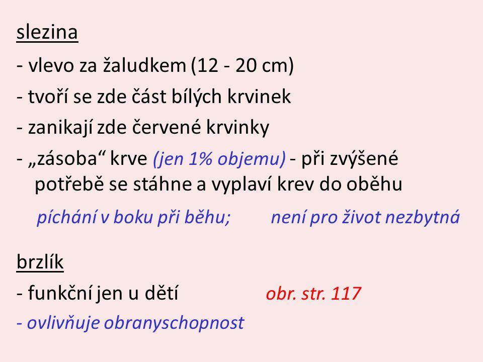 - vlevo za žaludkem (12 - 20 cm)