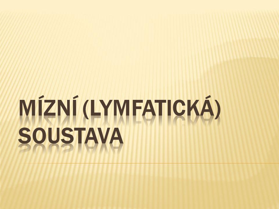 Mízní (lymfatická) soustava