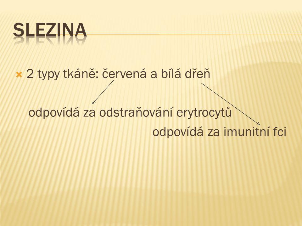 Slezina 2 typy tkáně: červená a bílá dřeň