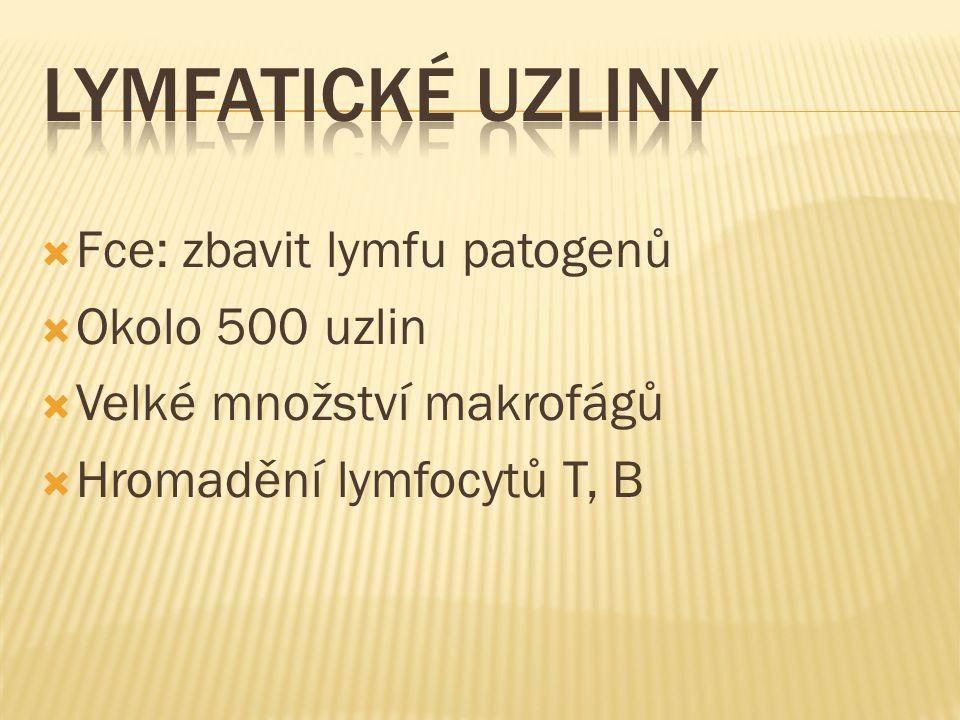 Lymfatické uzliny Fce: zbavit lymfu patogenů Okolo 500 uzlin