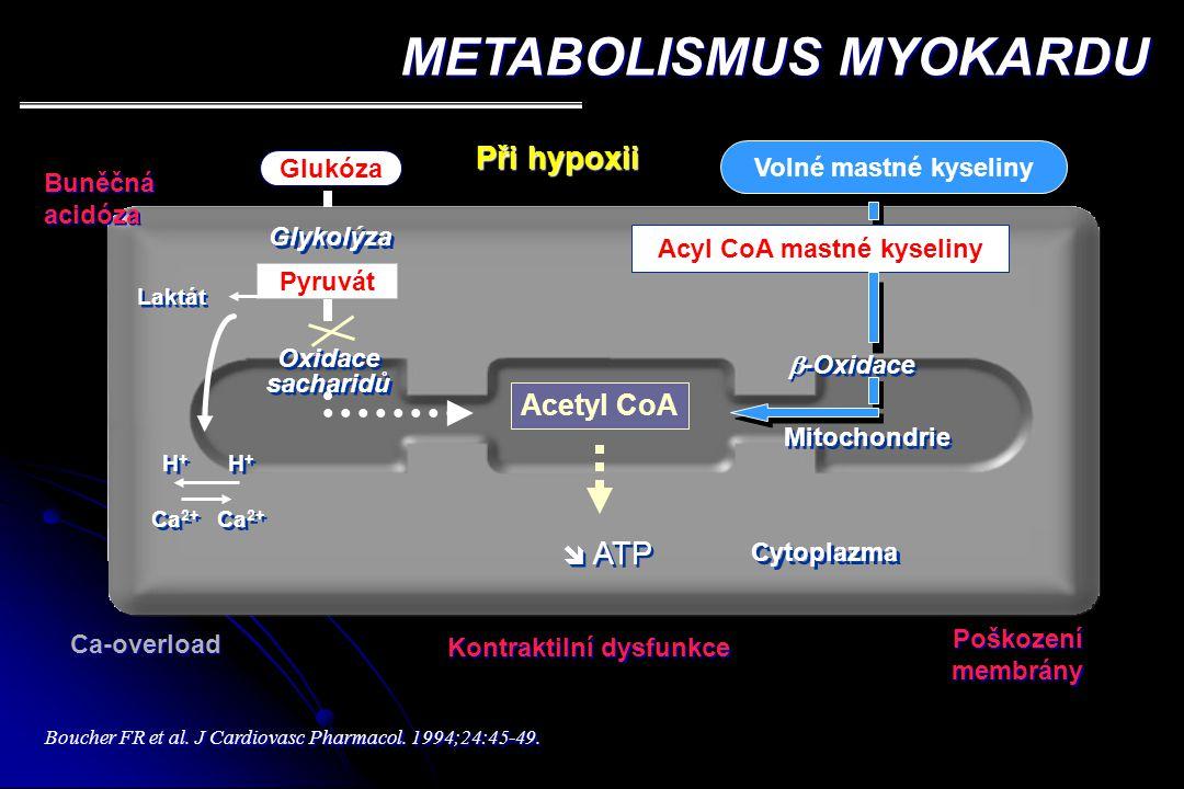 Acyl CoA mastné kyseliny Kontraktilní dysfunkce