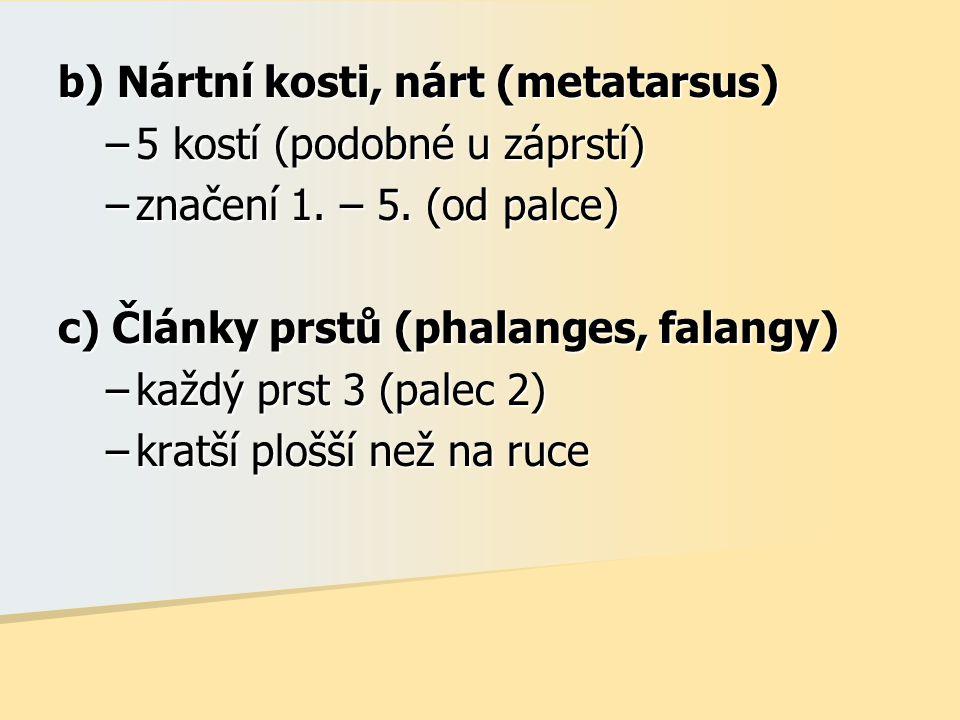 b) Nártní kosti, nárt (metatarsus)