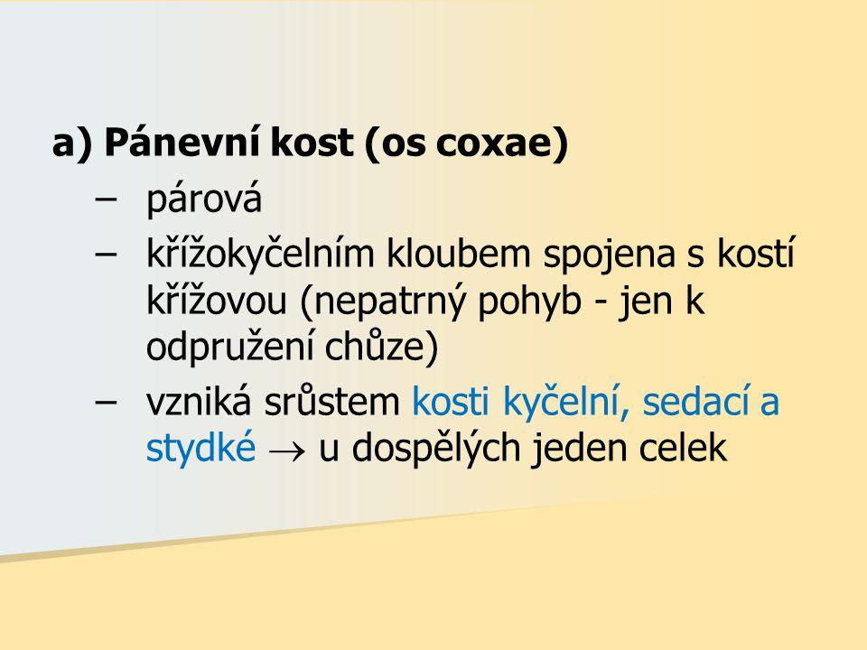a) Pánevní kost (os coxae)