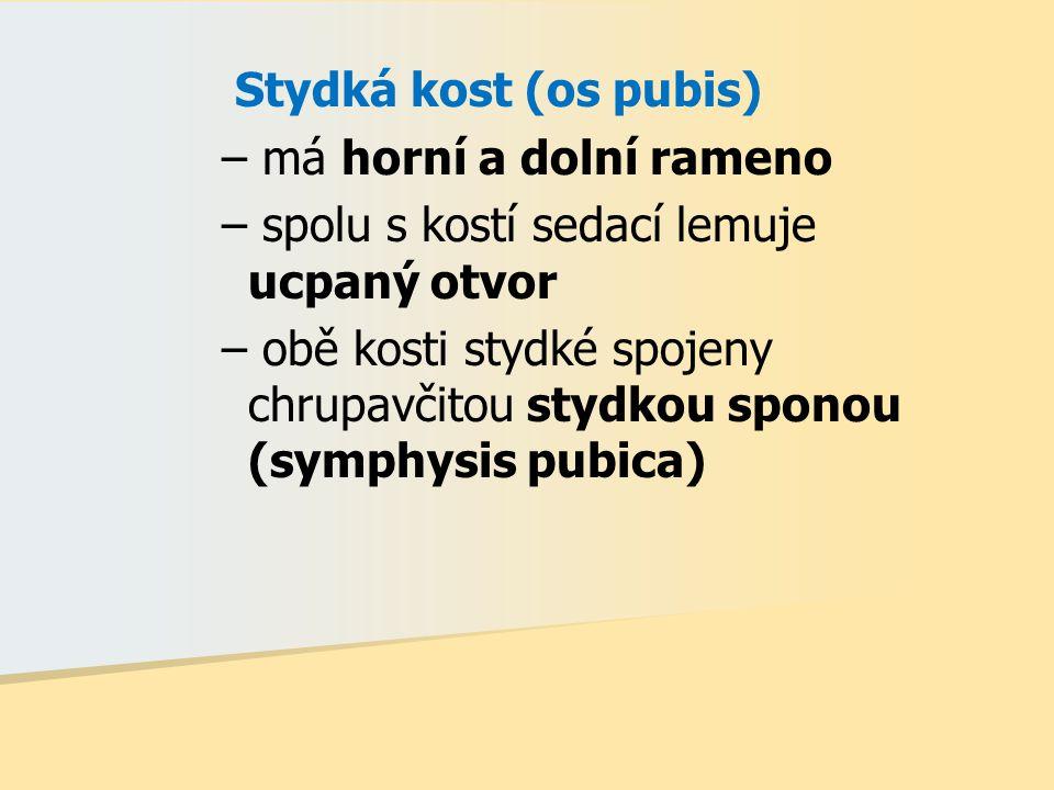 Stydká kost (os pubis) má horní a dolní rameno. spolu s kostí sedací lemuje ucpaný otvor.