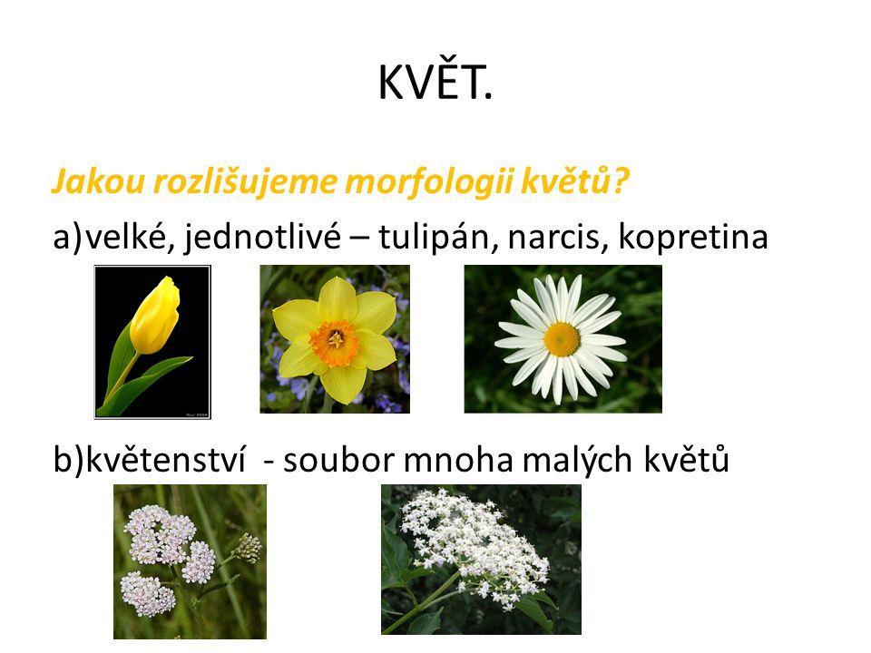 KVĚT. Jakou rozlišujeme morfologii květů