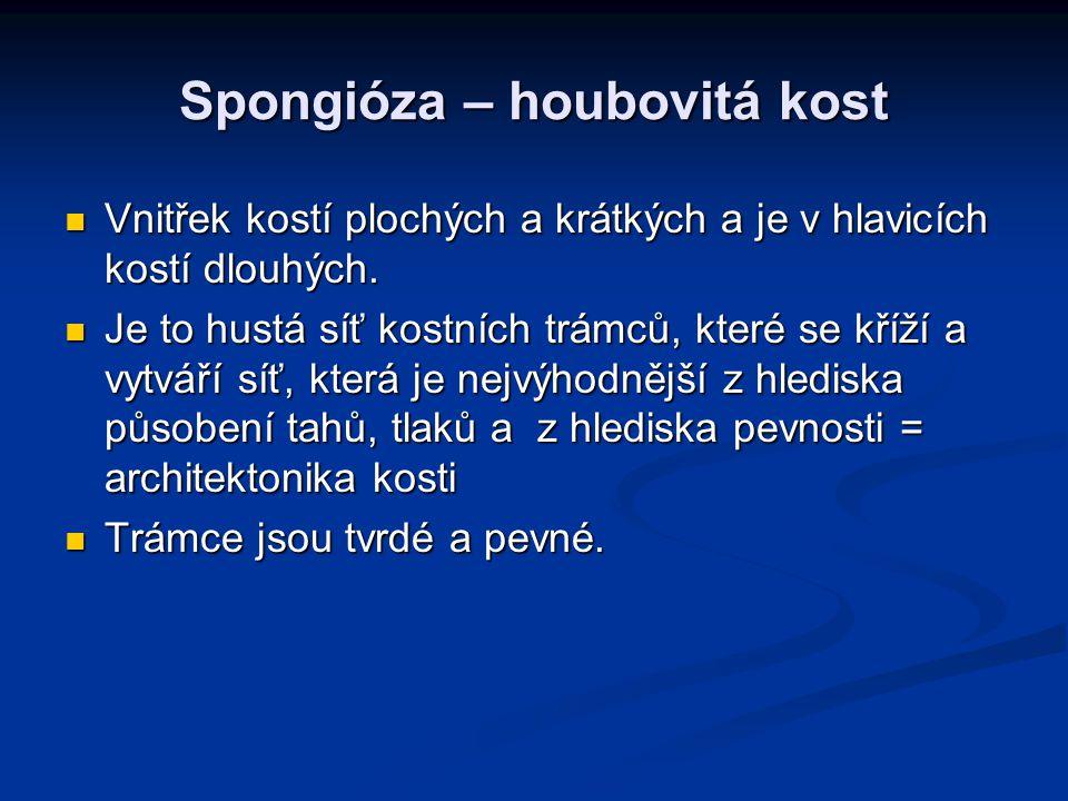 Spongióza – houbovitá kost