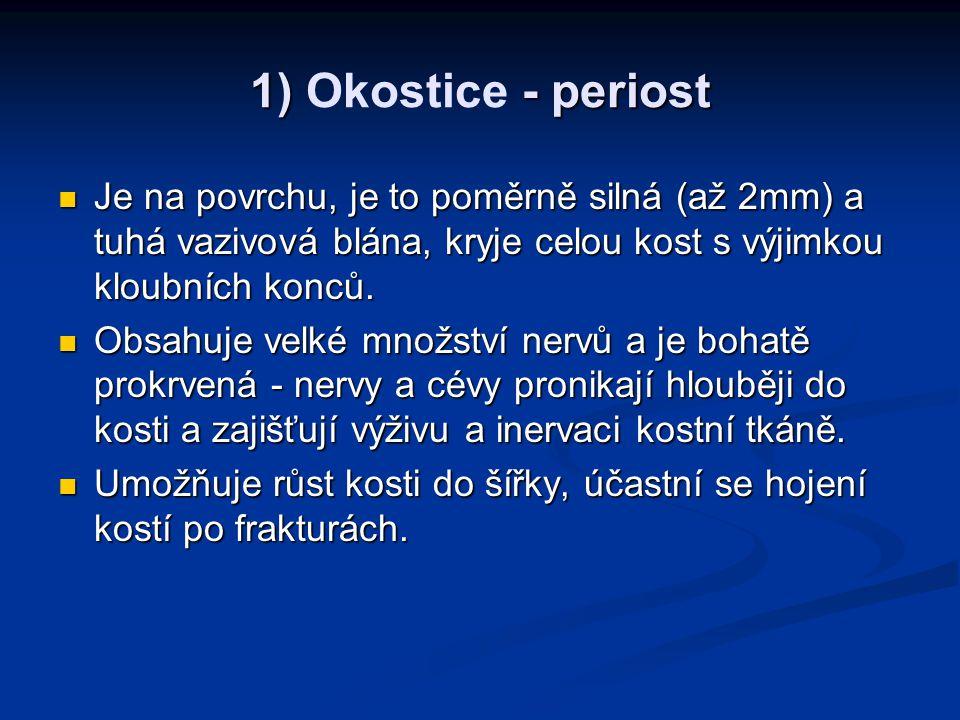 1) Okostice - periost Je na povrchu, je to poměrně silná (až 2mm) a tuhá vazivová blána, kryje celou kost s výjimkou kloubních konců.