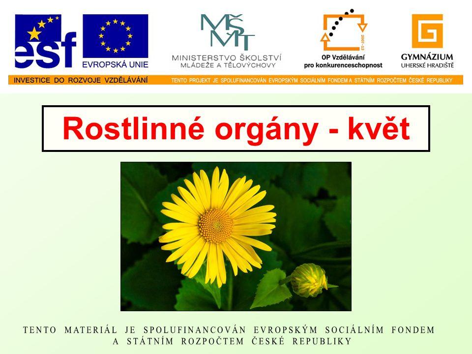 Rostlinné orgány - květ