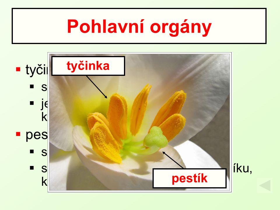 Pohlavní orgány tyčinka pestík tyčinka samčí pohlavní orgán květu