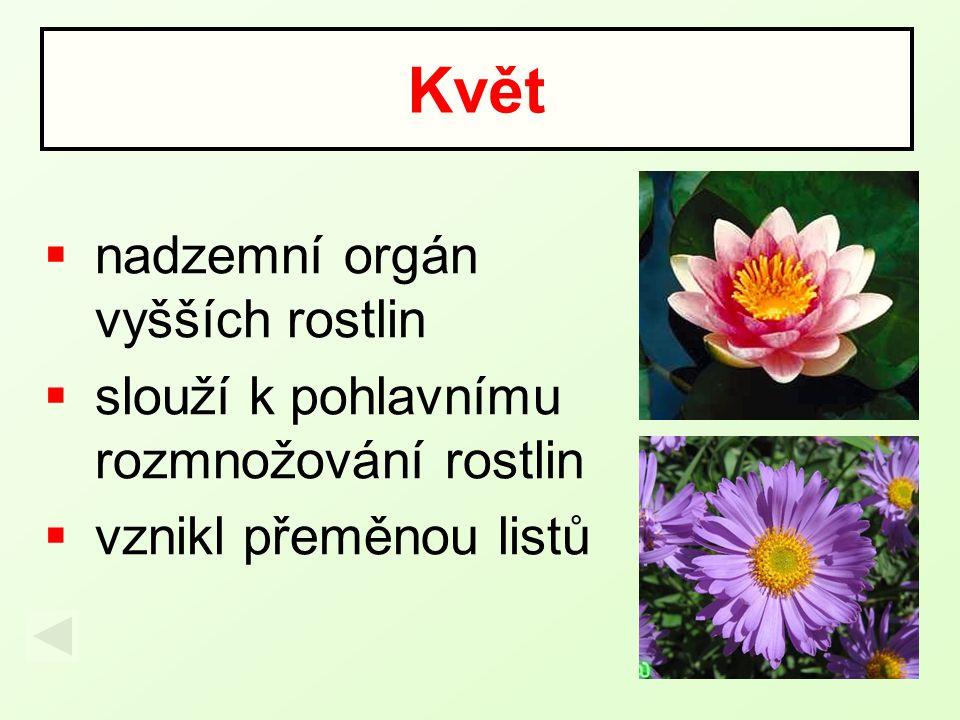 Květ nadzemní orgán vyšších rostlin