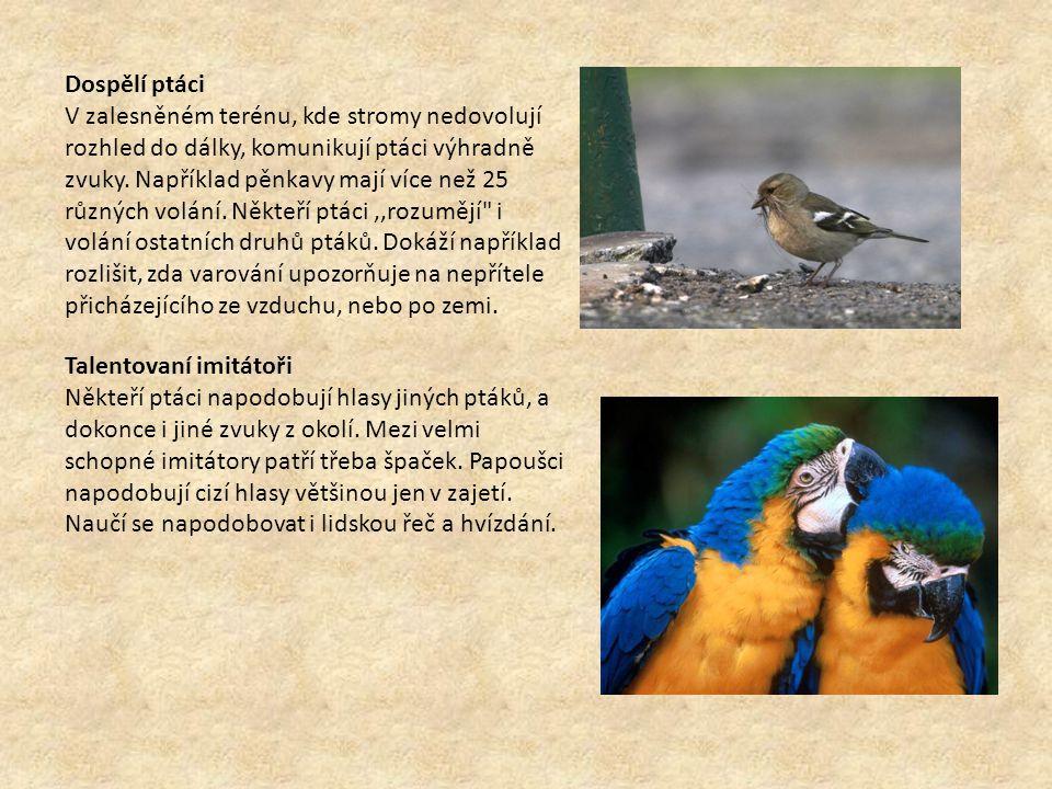 Dospělí ptáci