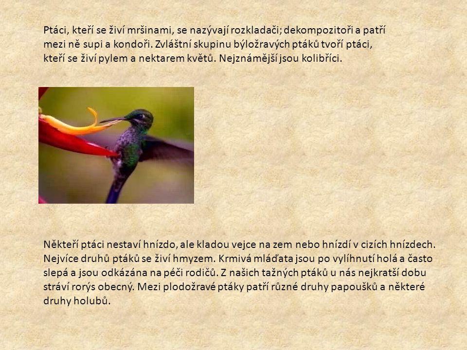 Ptáci, kteří se živí mršinami, se nazývají rozkladači; dekompozitoři a patří mezi ně supi a kondoři. Zvláštní skupinu býložravých ptáků tvoří ptáci, kteří se živí pylem a nektarem květů. Nejznámější jsou kolibříci.