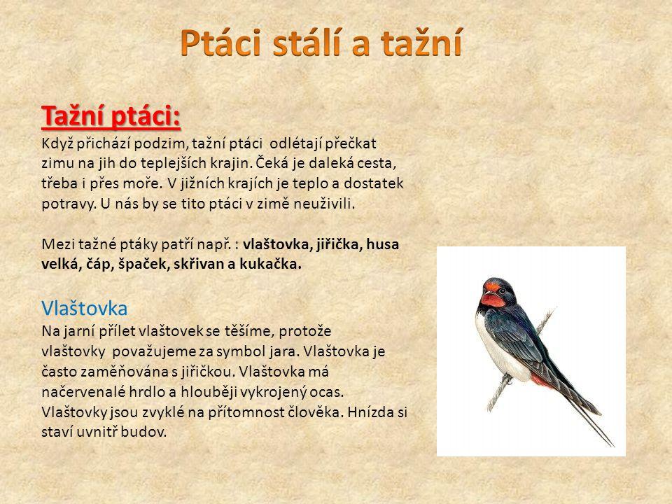 Ptáci stálí a tažní Tažní ptáci: Vlaštovka