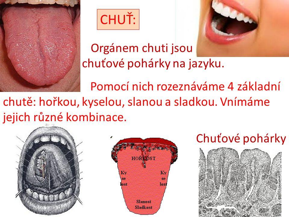 CHUŤ: Orgánem chuti jsou chuťové pohárky na jazyku.