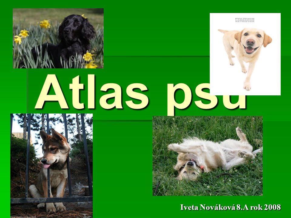 Atlas psů Iveta Nováková 8.A rok 2008