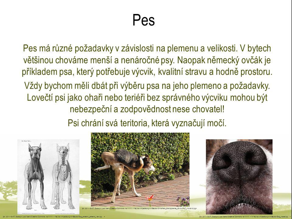 Psi chrání svá teritoria, která vyznačují močí.