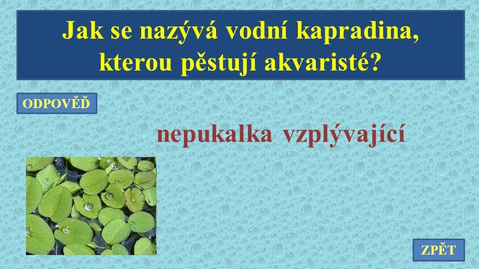 Jak se nazývá vodní kapradina, kterou pěstují akvaristé