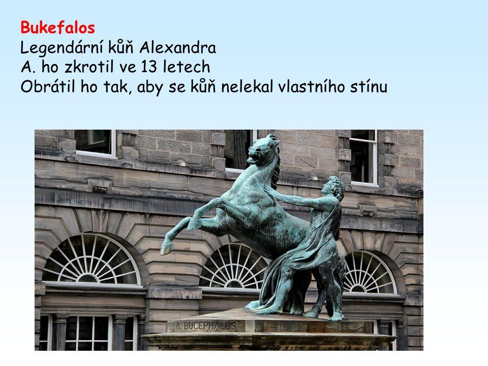 Bukefalos Legendární kůň Alexandra. A. ho zkrotil ve 13 letech.