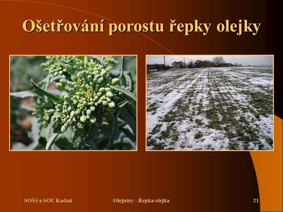 Ošetřování porostu řepky olejky Olejniny - Řepka olejka