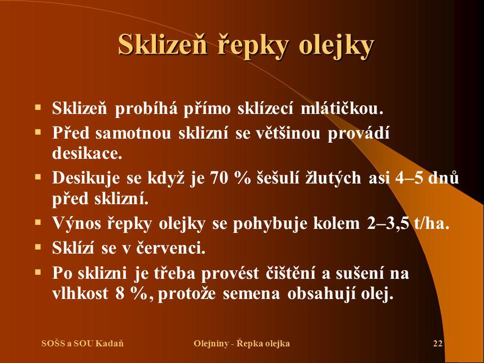 Olejniny - Řepka olejka