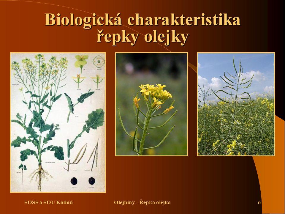 Biologická charakteristika řepky olejky Olejniny - Řepka olejka