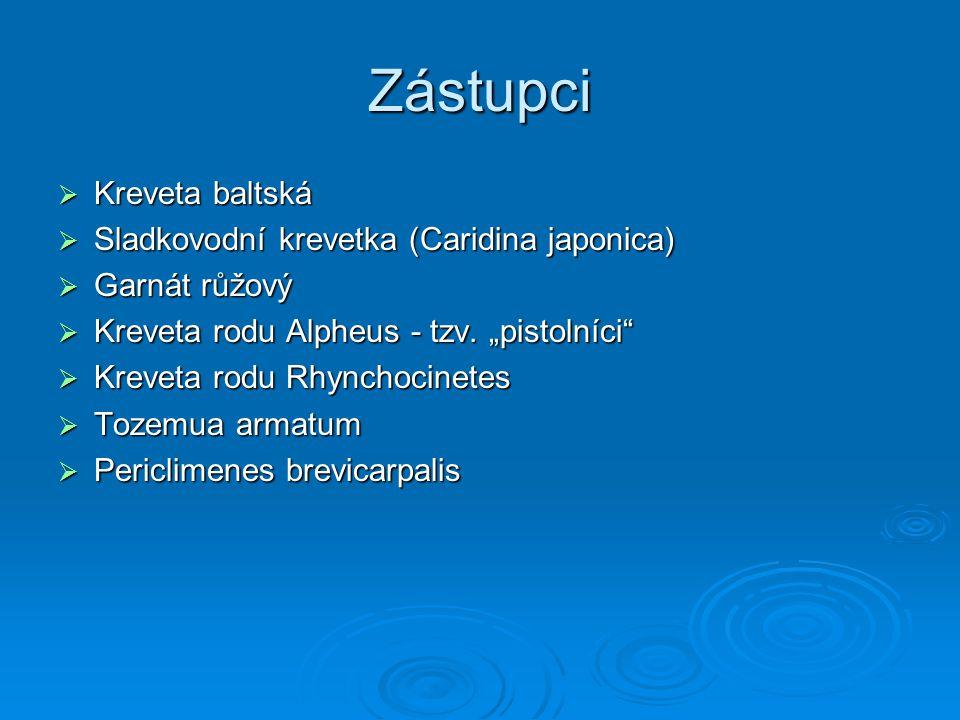 Zástupci Kreveta baltská Sladkovodní krevetka (Caridina japonica)