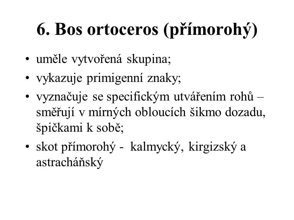 6. Bos ortoceros (přímorohý)