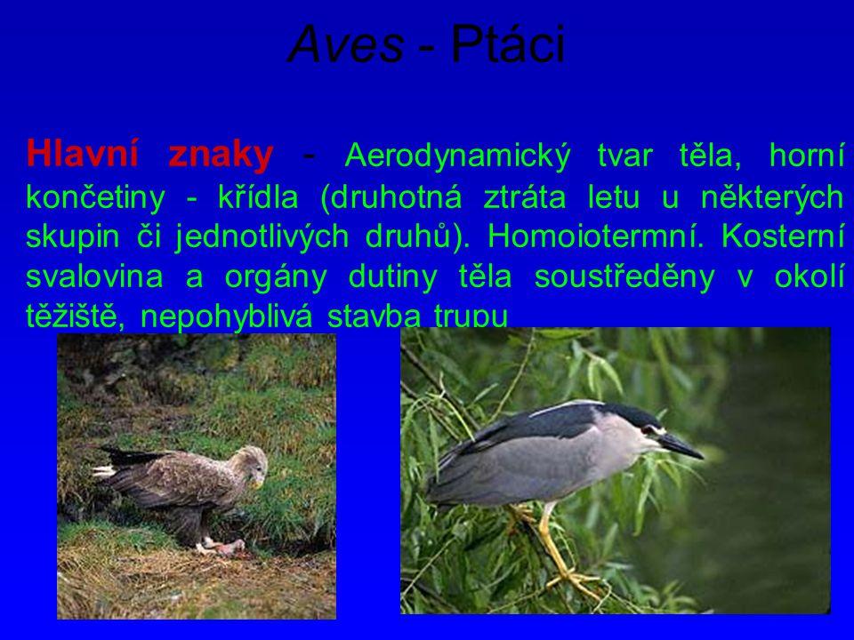 Aves - Ptáci