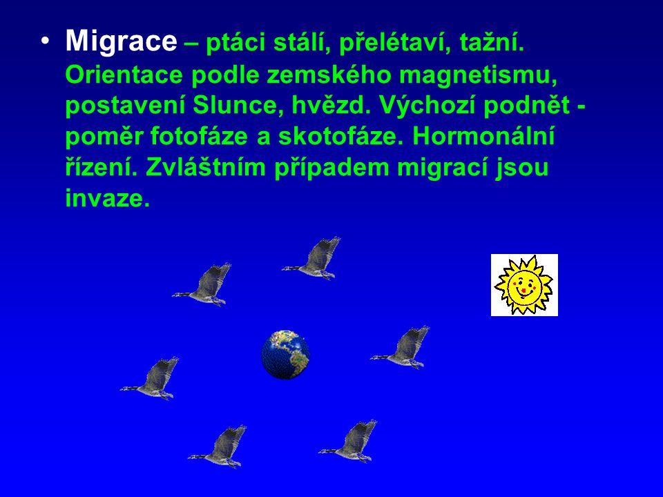Migrace – ptáci stálí, přelétaví, tažní