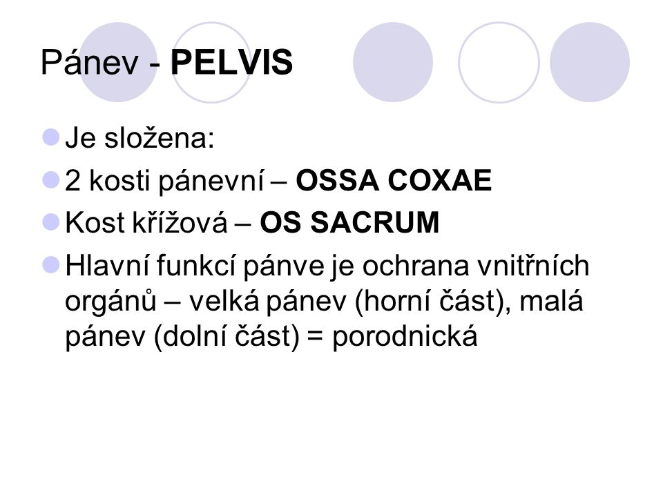 Pánev - PELVIS Je složena: 2 kosti pánevní – OSSA COXAE
