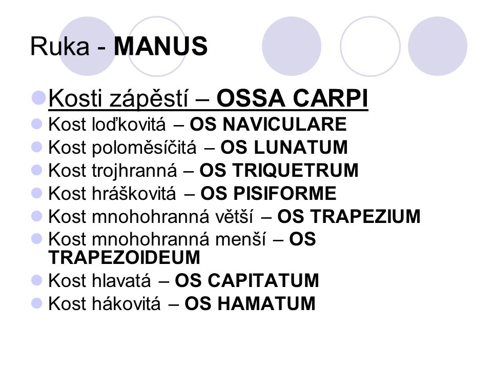 Ruka - MANUS Kosti zápěstí – OSSA CARPI Kost loďkovitá – OS NAVICULARE