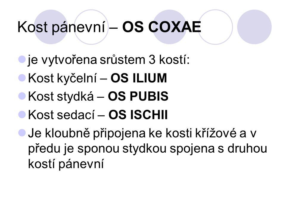 Kost pánevní – OS COXAE je vytvořena srůstem 3 kostí: