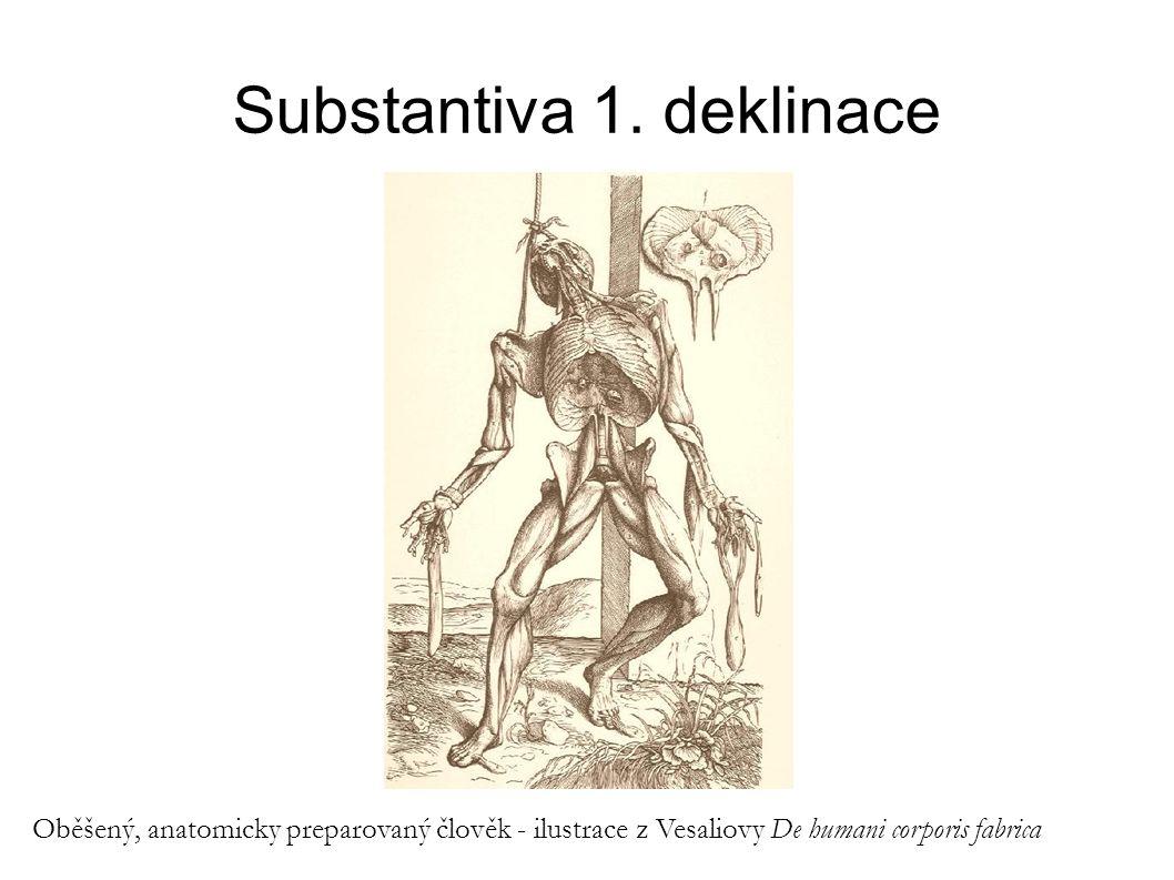 Substantiva 1. deklinace