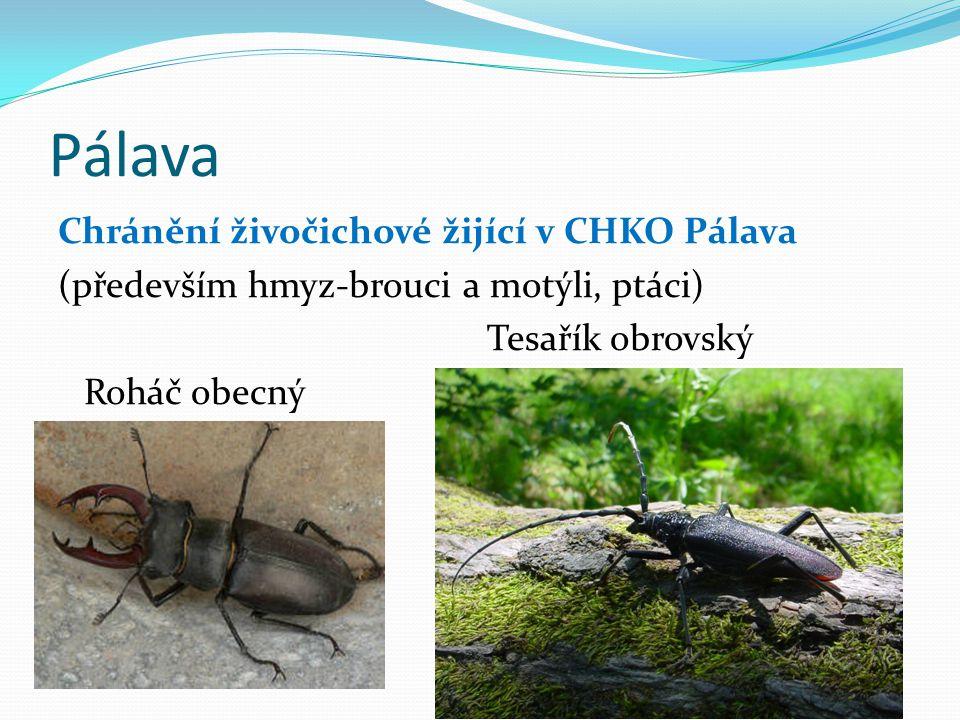 Pálava Chránění živočichové žijící v CHKO Pálava