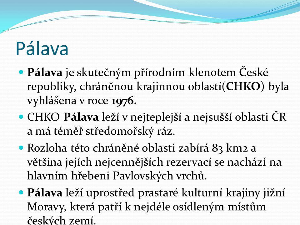 Pálava Pálava je skutečným přírodním klenotem České republiky, chráněnou krajinnou oblastí(CHKO) byla vyhlášena v roce 1976.