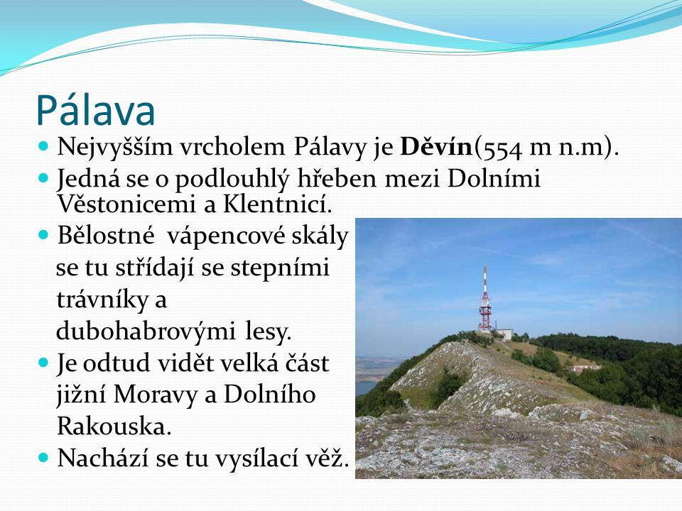 Pálava Nejvyšším vrcholem Pálavy je Děvín(554 m n.m).