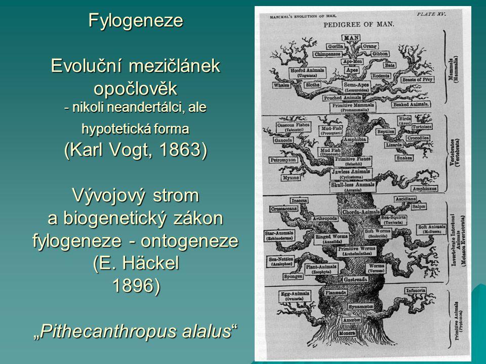 Fylogeneze Evoluční mezičlánek opočlověk - nikoli neandertálci, ale hypotetická forma (Karl Vogt, 1863) Vývojový strom a biogenetický zákon fylogeneze - ontogeneze (E.