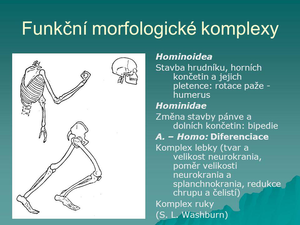 Funkční morfologické komplexy